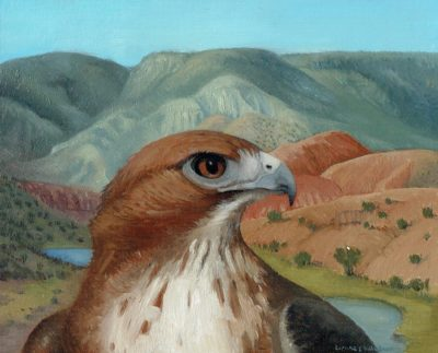 Red Tailed Hawk, Abiquiu Valley