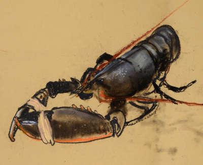 15 Black Lobster