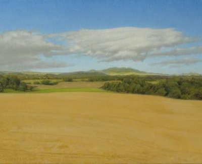 28 Wheatfield Late August Oil On Card 20X30Cm