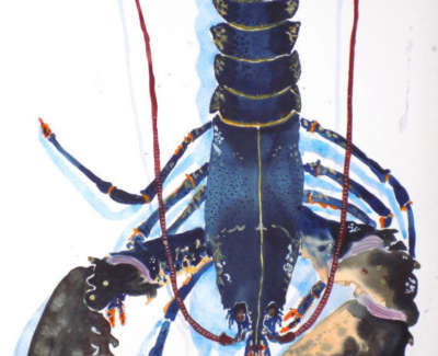 Big Lobster Watercolour Bockingford 420Gm 74X54 Cm Web