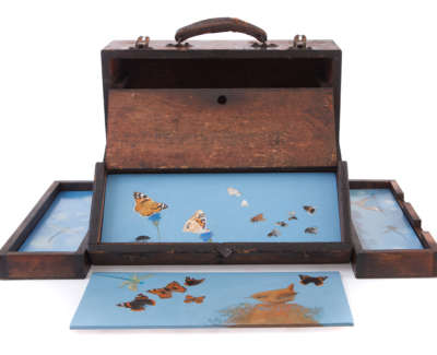 Birds Butterflies Dragonflies And Other Bugs  Oil On Panel In Wooden Tool Box 30 X 40 X 12 Cm £900 00 2