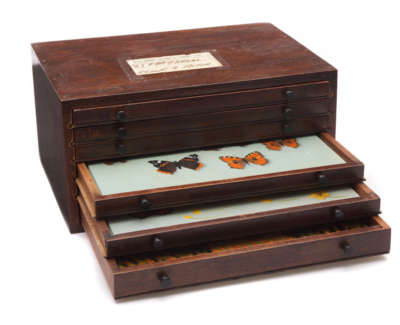Butterfly Box  Oil On Panel In Vintage Opticians Box 18 X 36 5 X 27 Cm £800 00