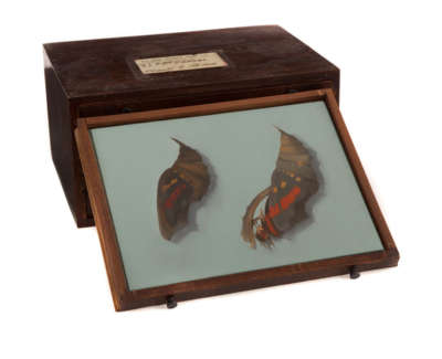 Chrysalis  Oil On Panel In Vintage Opticians Box 3 Of 6