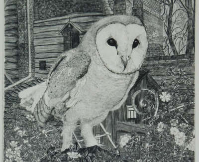 David Vaughan Wicks Barn Owl