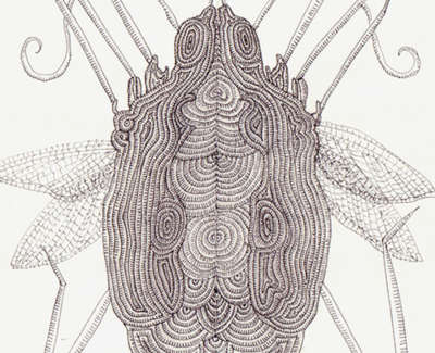 Decorative Clickbeetle Ink Wash And Technical Pen On Paper 21 5 X 13Cm £195