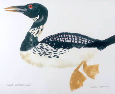 Great Northern Diver Oe Web