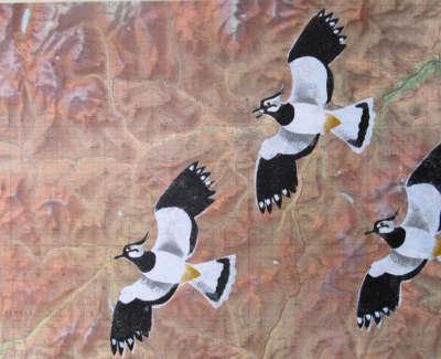 Highland Lapwings Web