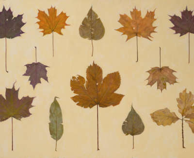 James Fairgrieve Rsa Rsw All The Leaves Acrylic On Gesso On Board 61 X 91 Cm £4000