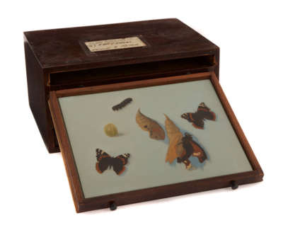 Life Cycle Of Butterfly  Oil On Panel In Vintage Opticians Box 1 Of 6