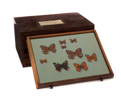 Red Admiral Peacock Tortoiseshell Small Copper  Oil On Panel In Vintage Opticians Box 4 Of 6