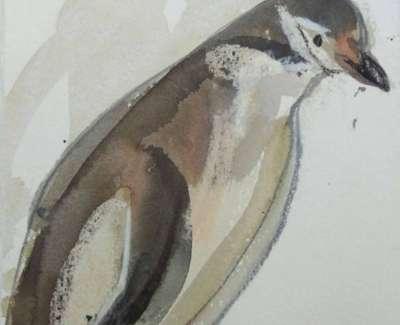 Scouller Chinstrap Penguinweb