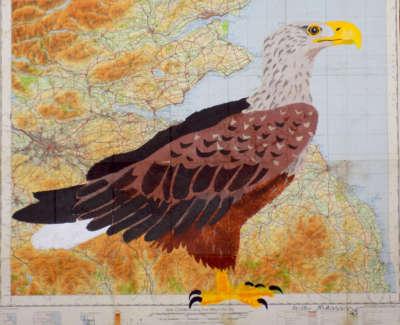 Sea Eagle  Pochoir On Edinburgh Map  Unique 80X72Cm Web