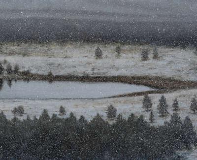 Snow Fall  Oil On Panel 37X80Cm