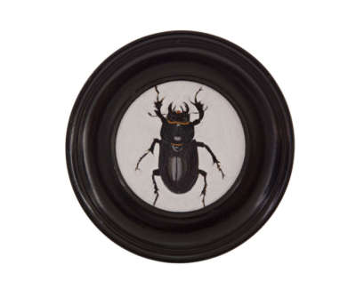 Stag Beetle Female  Oil On Fabriano Pittura Paper In Vintage Frame 9 5 Cm D £250 00