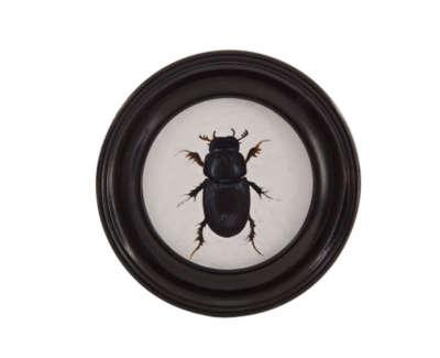 Stag Beetle  Oil On Pittura Paper In Vintage Frame 9 5 Cm D £250 00