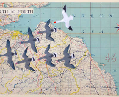 The Snow Goose Edinburgh Web