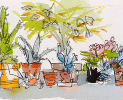 61 Scouller Glen Cactus Collection Watercolour 10X36Cm 450