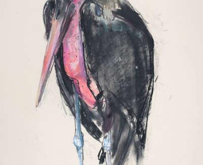 Scouller  L  Marabou Stork Pastelonpaper 71X51